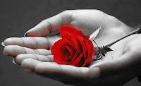 A csodás rózsa