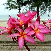 Nice flowers on the beach