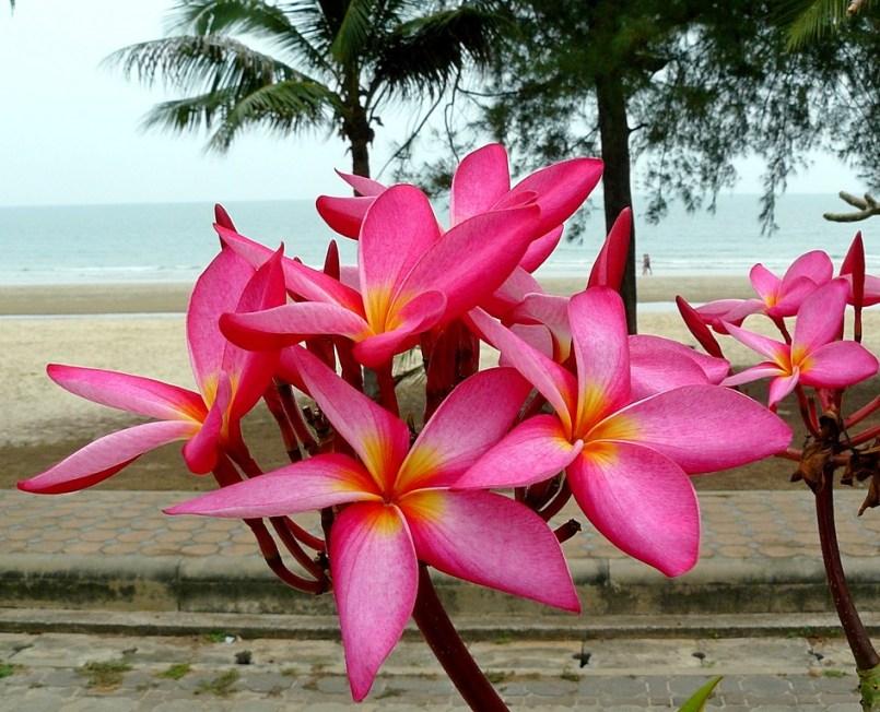Nice flower on the beach