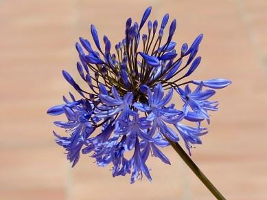 Amazing blue