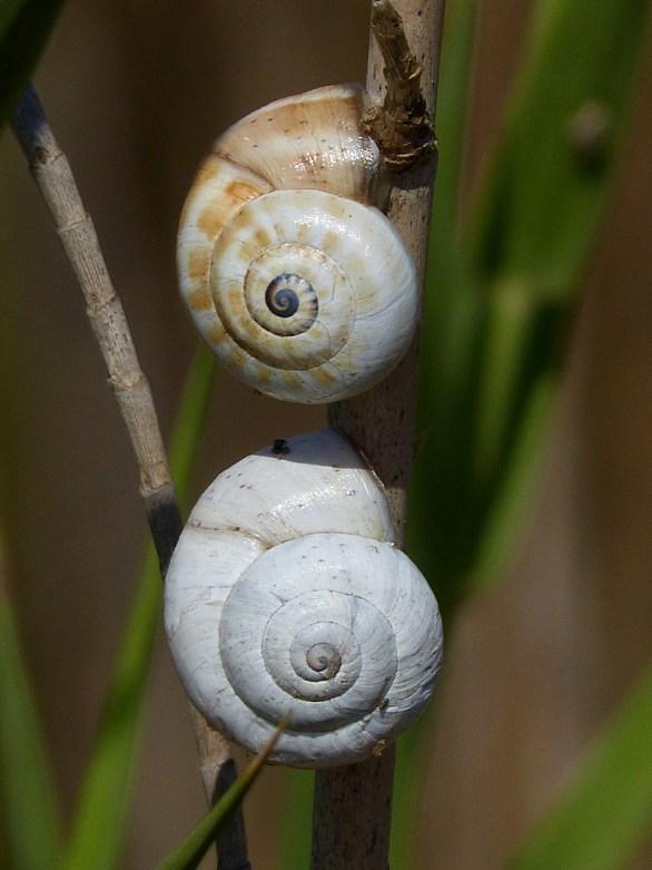 Shells-3