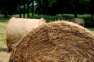 Hooirollen (C) Ronald Puma PIC_0064.900