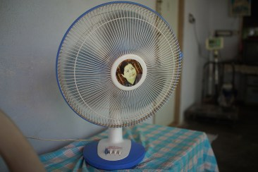 Free fan from the Chief Minister