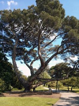 Ez egy nagy fa, aminek lusta voltam elolvasni a nevét