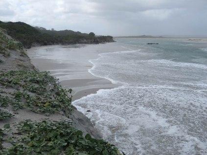 Waves undercutting the vegetated dunes