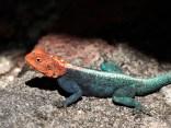 An awsome lizard