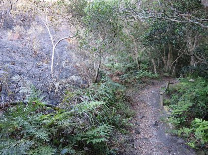 The boundary between fynbos and forest