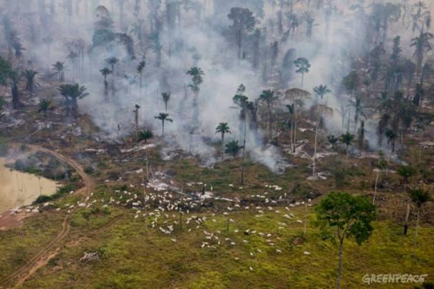 """Fumaça proveniente das queimadas para limpar a terra para pecuária ou agricultura. De acordo com um novo relatório divulgado pelo Greenpeace Brasil, refeições preparadas e calçados da Nike podem conter um impacto ambiental que inclui a destruição da floresta amazônica. O crescimento da pecuária é responsável pela maior parte do desmatamento do país e também a maior fonte de emissão de gases do efeito estufa. Após três anos de investigações, o resultado foi o rastreamento da carne, couro e produtos provenientes de fazendas de gado envolvidas no desmatamento ilegal, no coração da Amazônia. O relatório """"Slaughtering the Amazon"""" mostra que esses produtores abastecem cadeias de fornecedores de marcas como Nike, Adidas/Reebok, BMW, Carrefour e Wal-Mart. O documento também demonstra que o governo Lula é cúmplice ao financiar a destruição, minando seus próprios compromissos climáticos e destruindo um dos principais fontes de proteção do clima."""