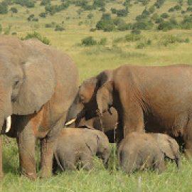 Safari 2012 012