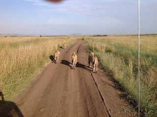 Safari 2012 203