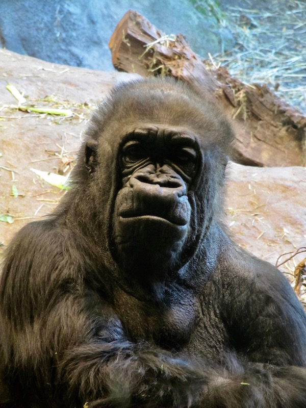 zoo-2010-209