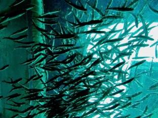 Seattle Aquarium 2010 069