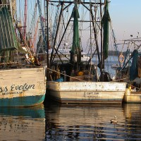 Shrimp Boats and Their Names