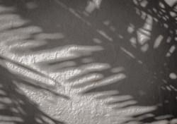 Stucco wall palm frond shadow - Boca Grande, FL
