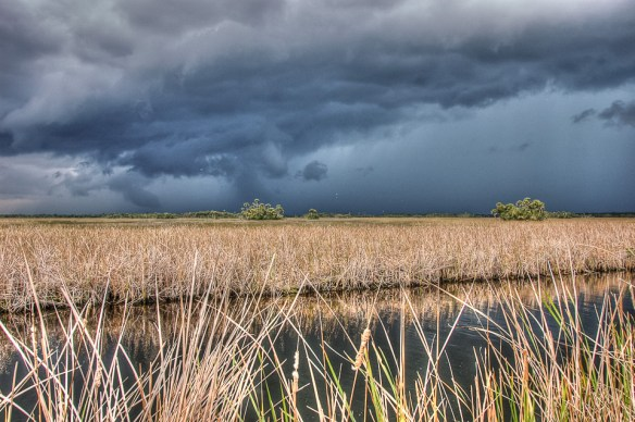 Everglades Dry Season
