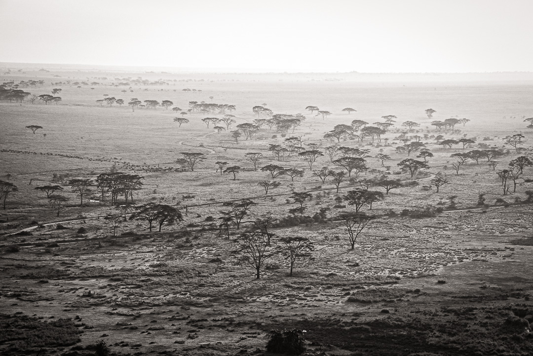 Beyond the Serengeti