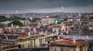 Pigeons Flying Over Havana