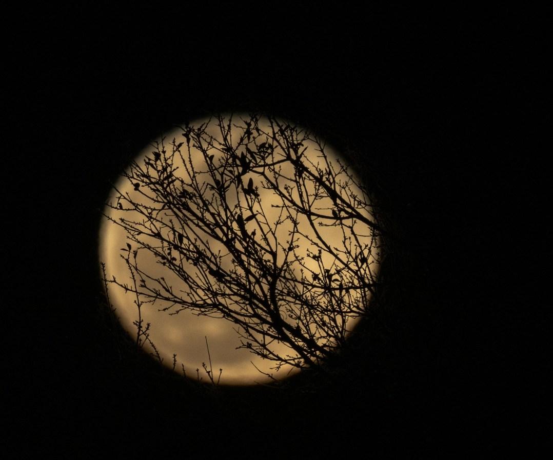 Full Moon 01/21/2019