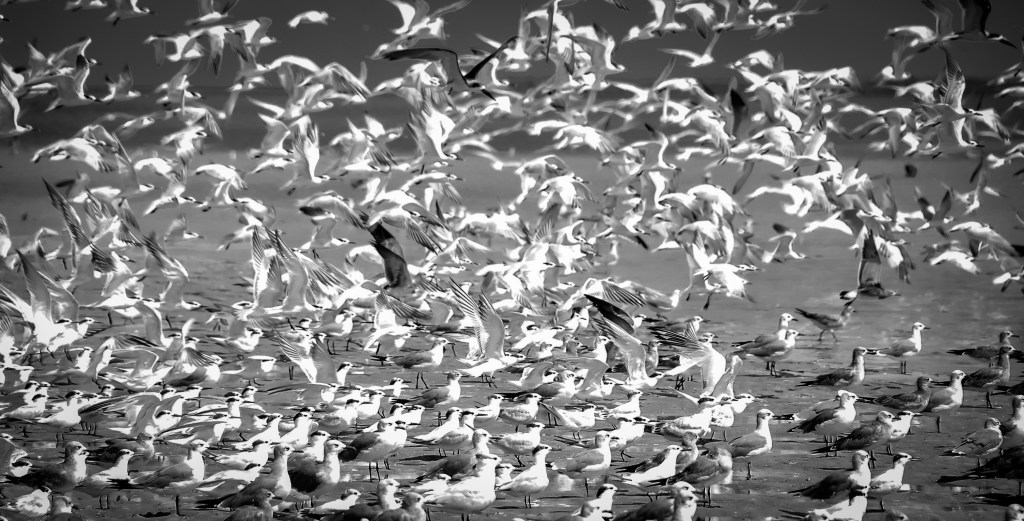 Seabirds take flight from North Captiva Island, Florida