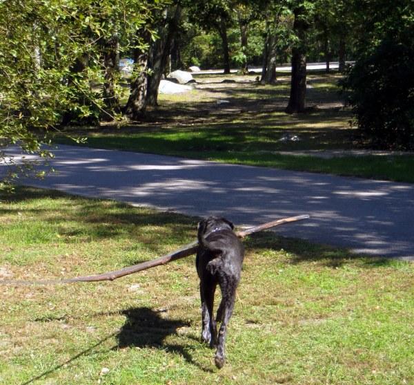 jack with big stick