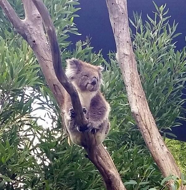 Love my eucalyptus!