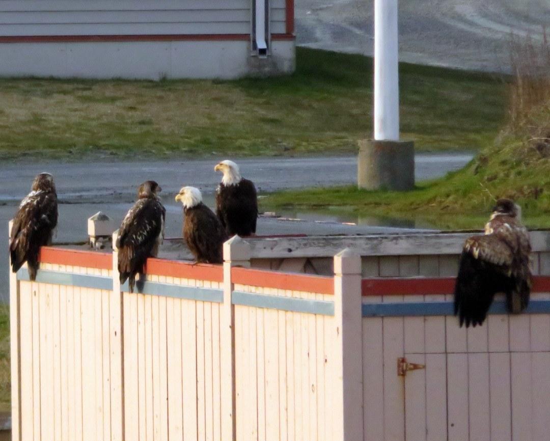 eagles trash