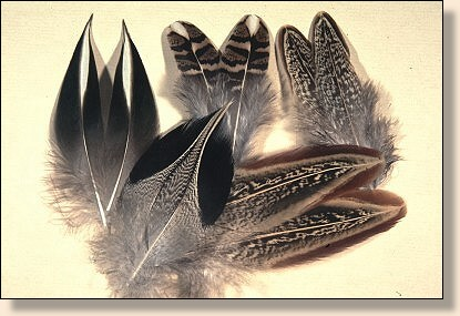 Assorted matched feathers for full featherwing flies