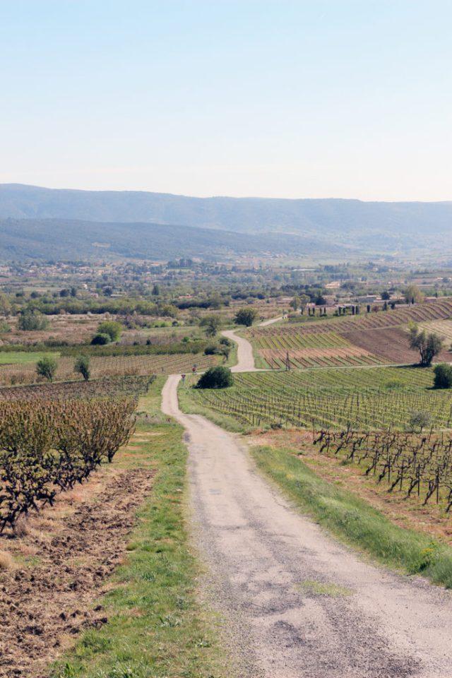 Wine_Rhone_valley_travel_blog_Avignon47