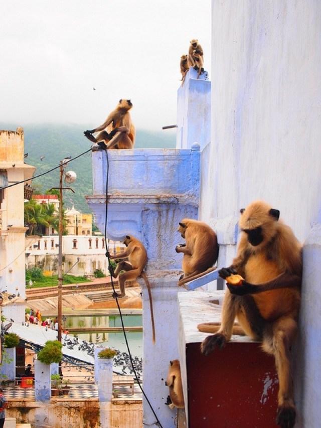 India_Kerala_province_rooftopantics_travelblog_travelconsultant3