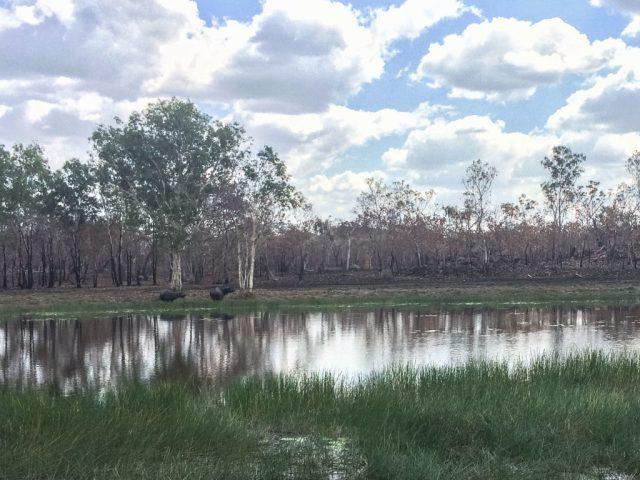 deadly_animals_northern_territory_australia_kakadu_katherine_rooftopantics_travelblog-15-of-15