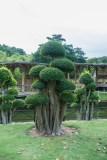 kuala-lumpur-botanical-garden_P1050552