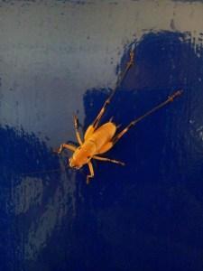 strange bug seltsam käfer