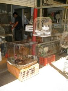 Vogelverkäufer auf dem Markt in Porto