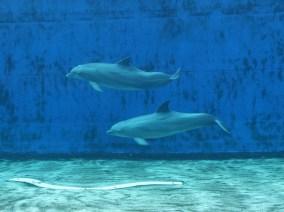 define aquarium genua