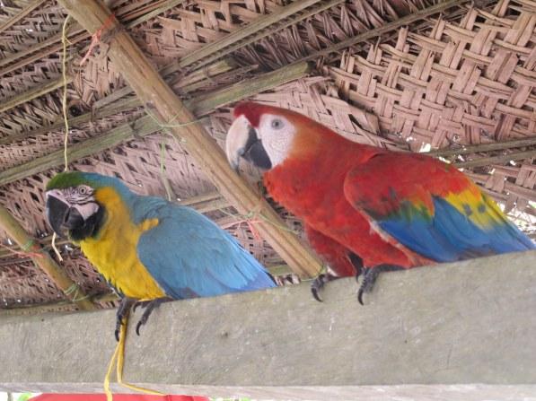 Ich bin Erwin, der Papagei - oder so ähnlich :-)