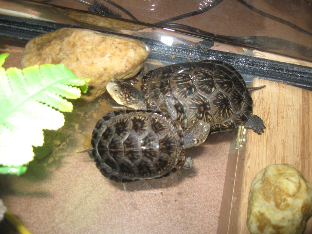 Turtle Catalog (2/3)