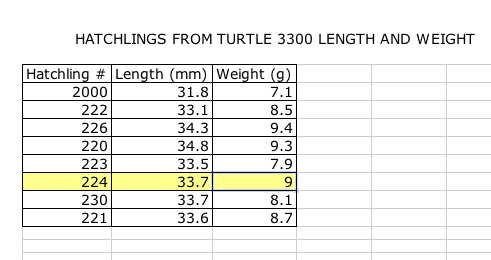 2011 Hatchlings By the Number (2/4)