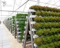 60 easy to try herb garden indoor ideas (41)