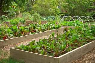 35 stunning vegetable backyard for garden ideas (11)