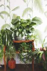 55 greeny indoor plants ideas that will purify your room's air (11)