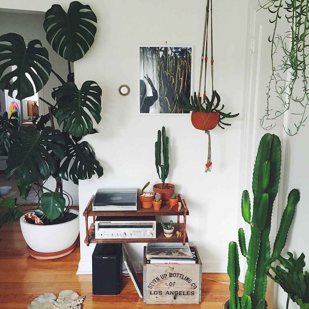 55 greeny indoor plants ideas that will purify your room's air (2)