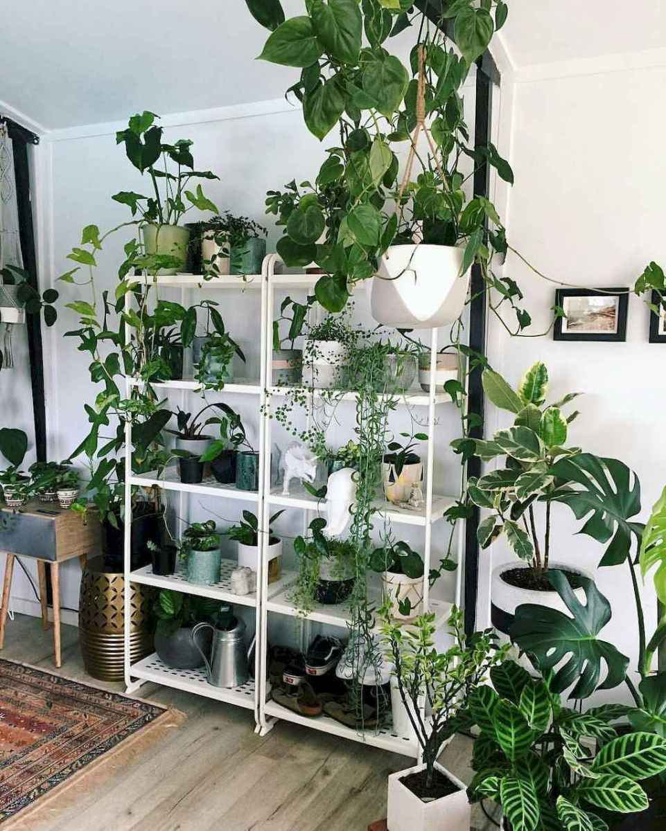 55 greeny indoor plants ideas that will purify your room's air (21)