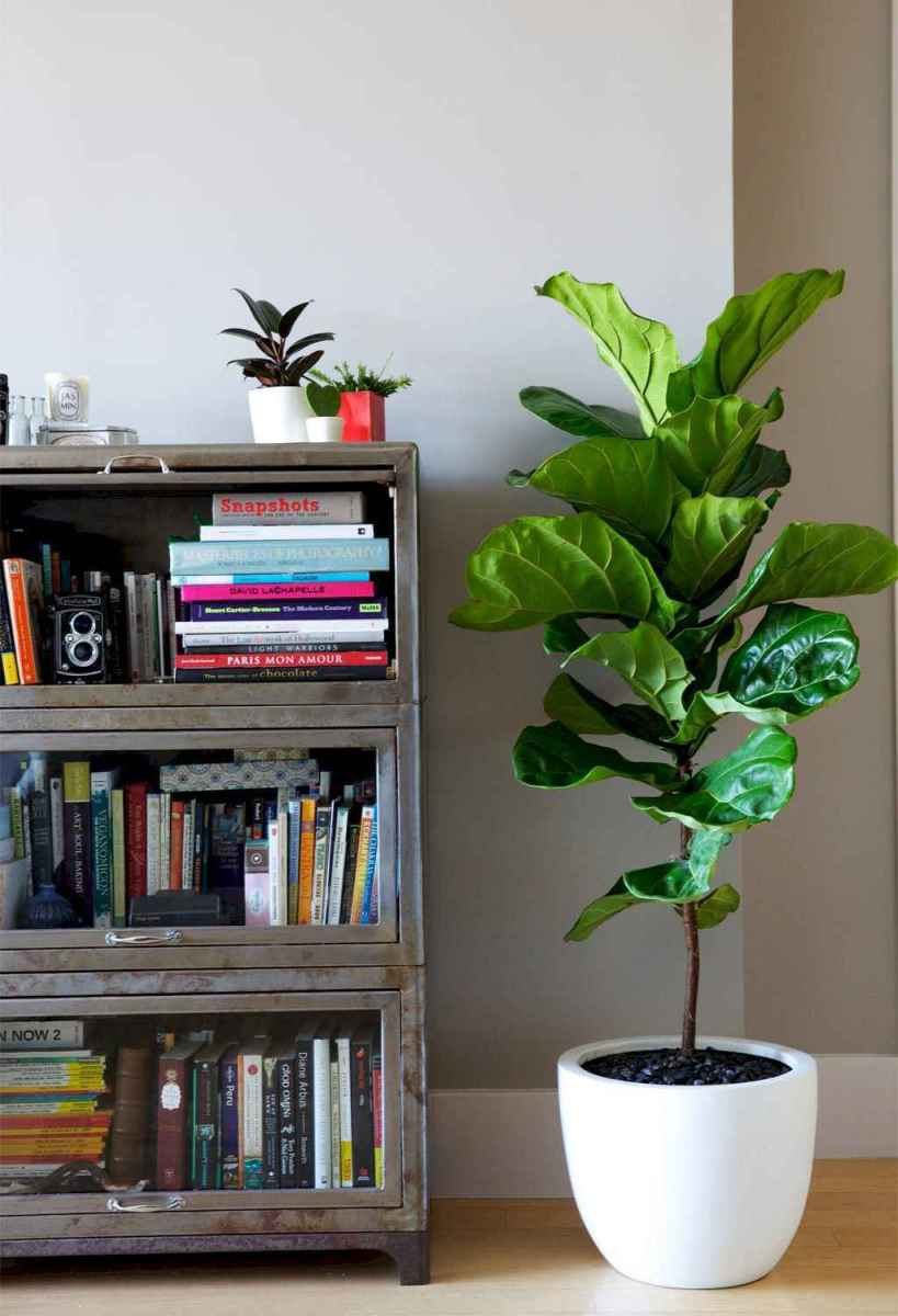 55 greeny indoor plants ideas that will purify your room's air (22)
