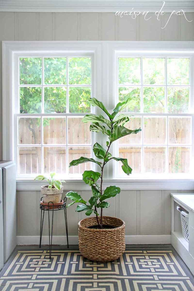 55 greeny indoor plants ideas that will purify your room's air (41)