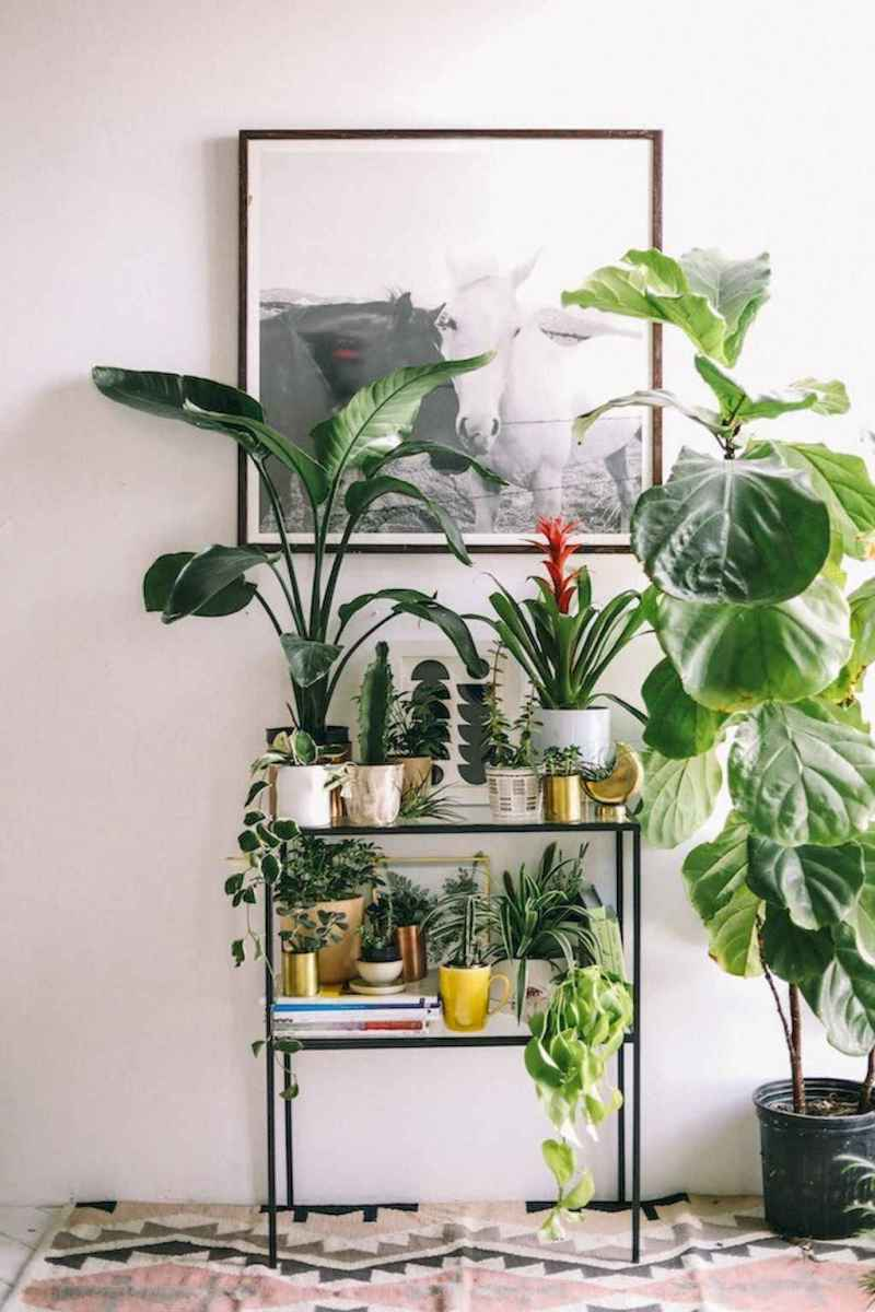 55 greeny indoor plants ideas that will purify your room's air (47)