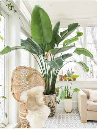 55 greeny indoor plants ideas that will purify your room's air (51)