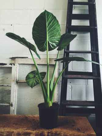 55 greeny indoor plants ideas that will purify your room's air (54)
