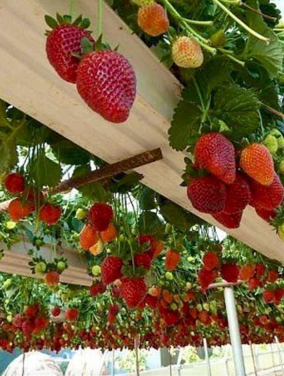 Most creative garden design & decor ideas (25)