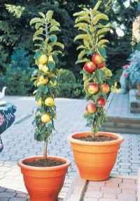 Adorable diy container herb garden design ideas (13)