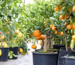 Adorable diy container herb garden design ideas (49)